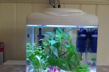 Aquarium  voor  mijn dochter