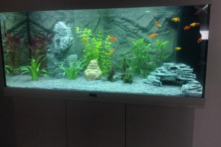 Ons nieuwe aquarium