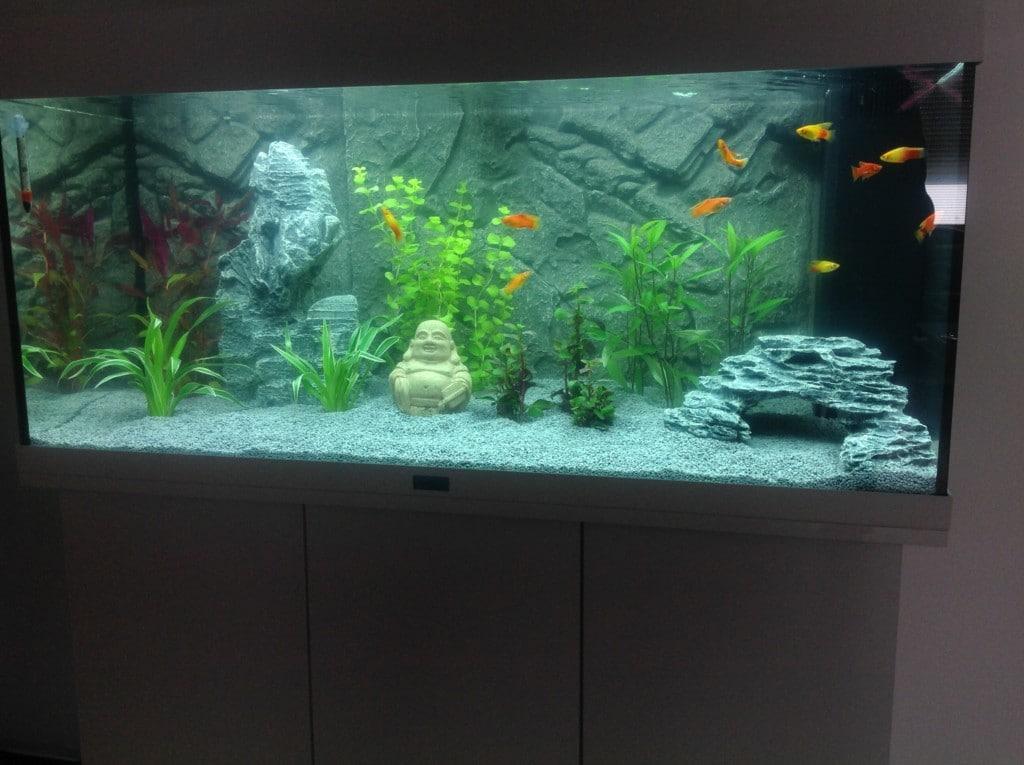 Ons aquarium