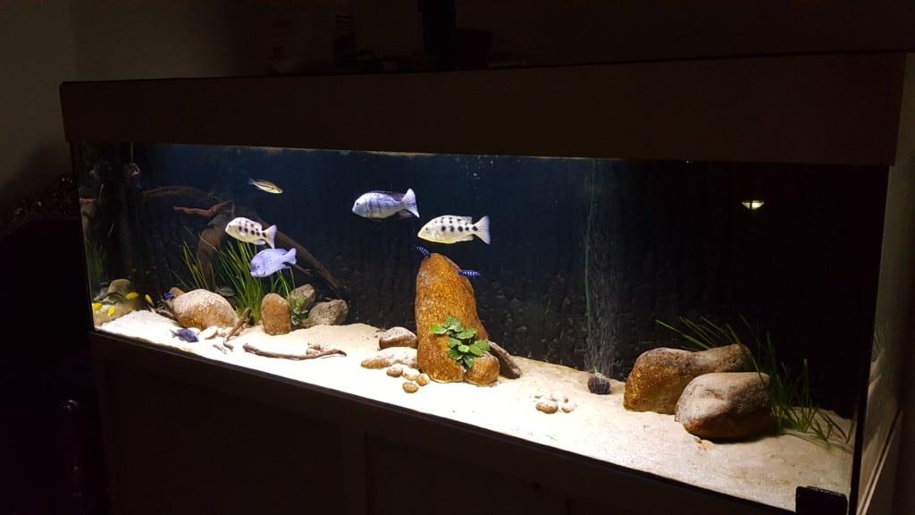 Aquarium overzicht in de avond
