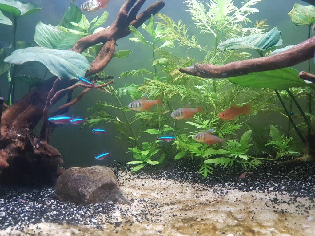 Zwemmende vissen