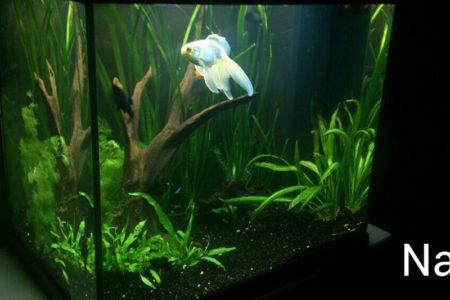Aquarium Juwel Lido 125L