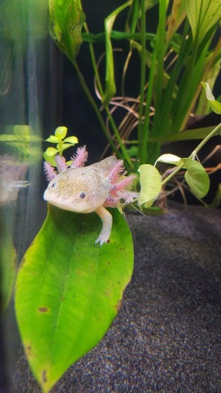 Bumble, ligt graag op de planten.