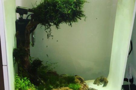 Biorb aquarium 60 liter.