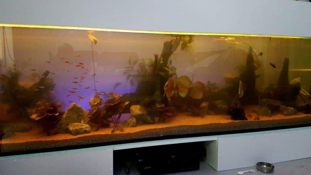 Zonsop en ondergang simulatie met een sfeerledstrip achter het aquarium