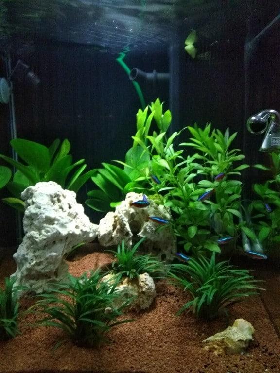 2,5 week later tetra's in hun nieuwe omgeving