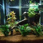 Superfish panorama 40 1