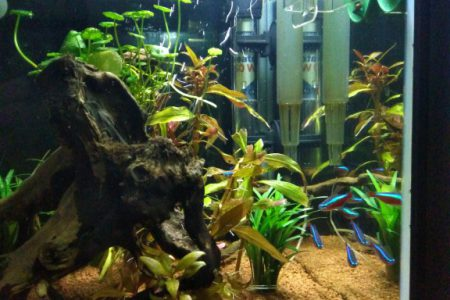 Superfish panorama 40