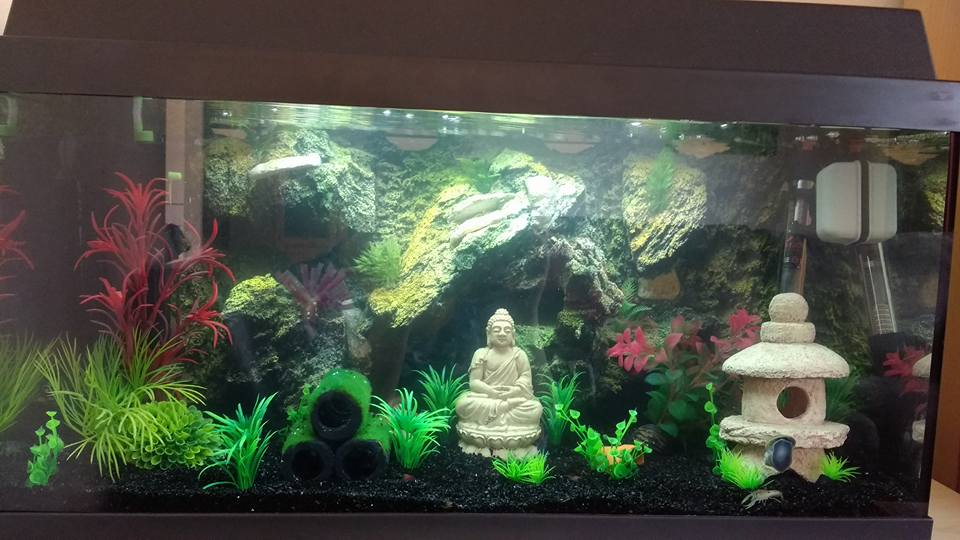 Aquarium in boedha stijl