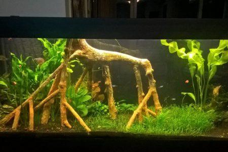 Mijn heringerichte aquarium begint erop te lijken, vind je niet? :-)