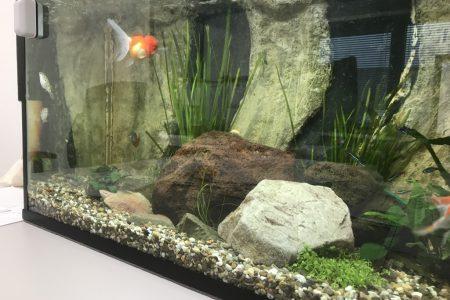 Mijn aquarium 1
