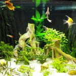 Nog wat meer visjes