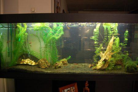 Het was een onverwarmd aquarium voor mijn Notropis Chrosomus, die nu in de vijver zwemmen en het daar veel beter naar hun zin hebben!