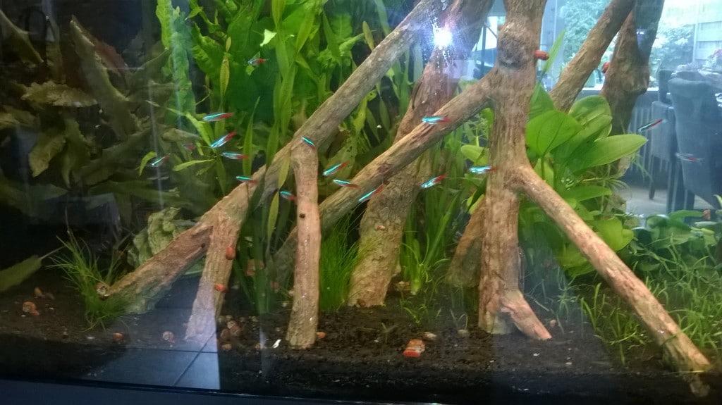 een klein stukje van het aquarium overzicht volgt later