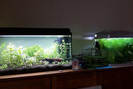 Beide aquaria