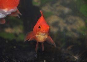 Dit is onze Bert. Een vrolijk visje ondanks zijn duidelijk misvormde bek.