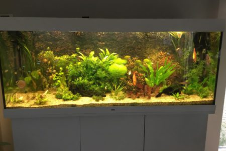 Aquarium in opbouw, vind veel beplanting mooi