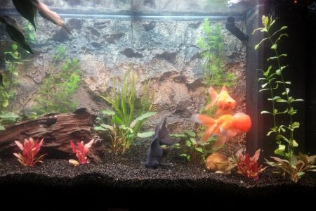 Alle visjes er in. Plantjes geplaatst. Nu maar kijken wat ze van de extra bewegingsruimte vinden.