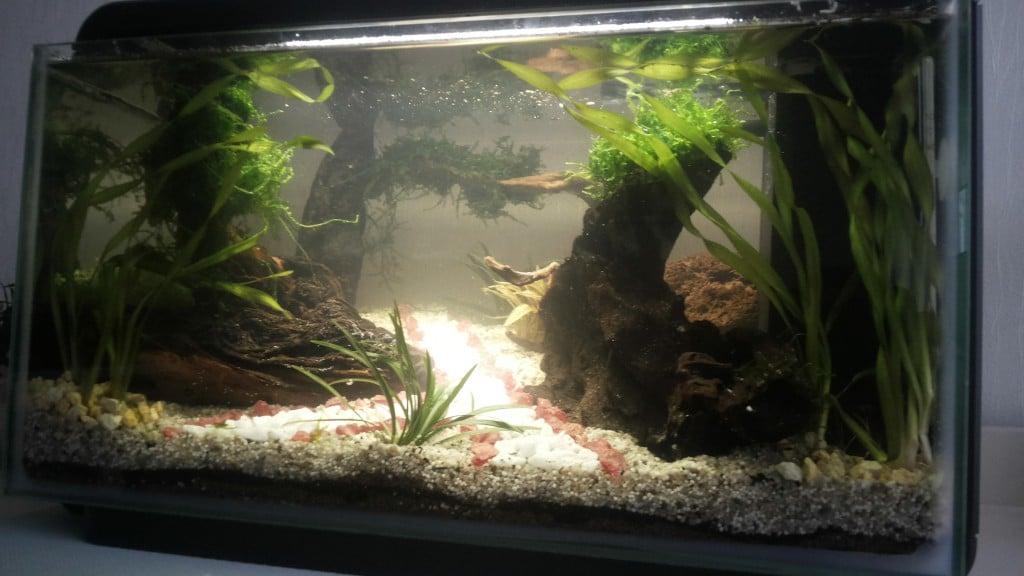 Eerste keer aquarium bouwen