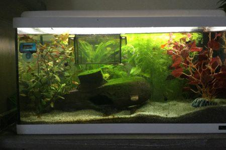 Het voledige aquarium