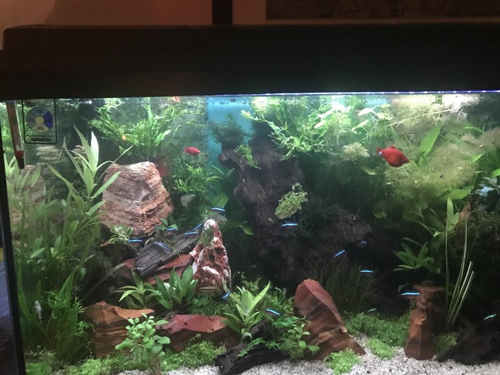 Impressie van aquarium met bewoners