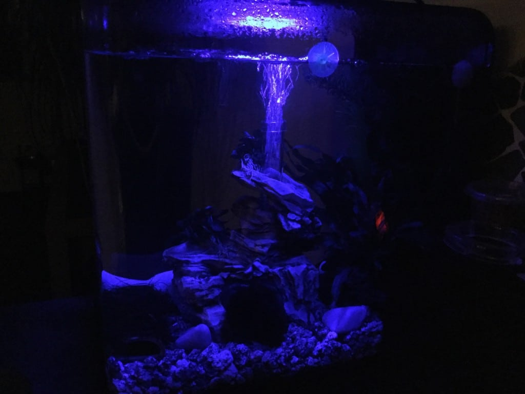 Ik heb een mcr led licht in mijn aquarium. Deze bootst maanlicht na en heeft een zonsop-en ondergangscyclus. Staat op 10 uur daglicht.
