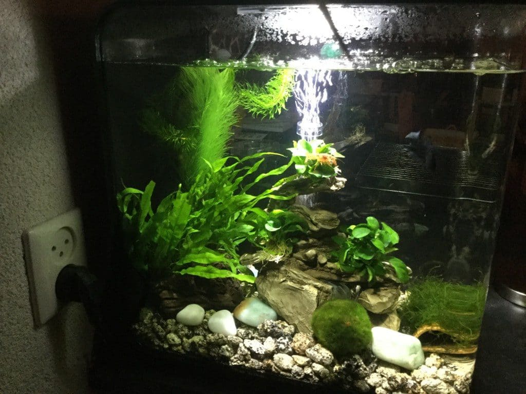 Linkerzijde van mn aquarium vanuit de woonkamer gezien