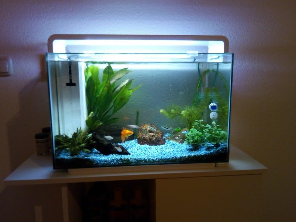 Mijn 60 L aquariumpje
