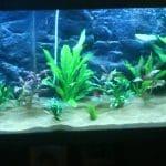 Planten met de nieuwe led verlichting