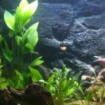 nieuwe led verlichting geplaatst 2 weken naar het starten van het aquarium