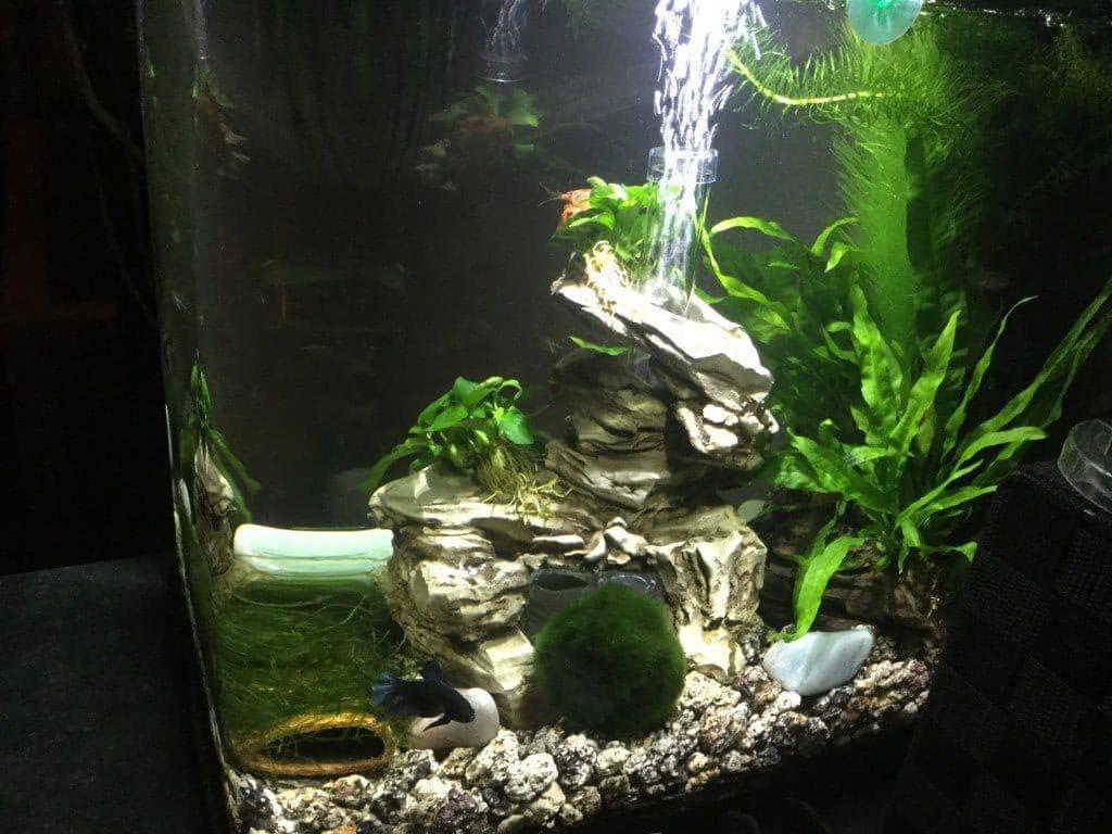 Rechterzijde van mn aquarium vanuit mn keuken gezien