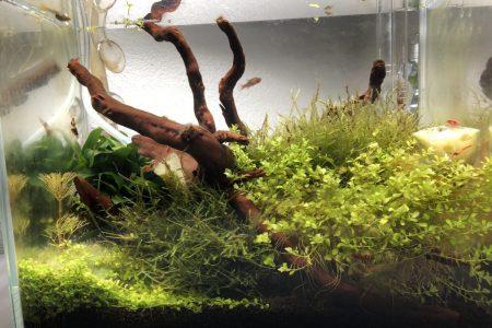 eerste aquascape