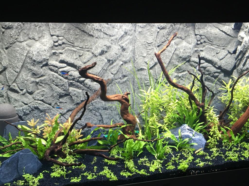 2 weken verder met de plantengroei en nieuwe vissen.