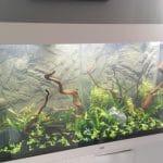 De opstart van mijn nieuwe Juwel Rio 300 aquarium. Nog maar juist de plantjes erin geplaatst.