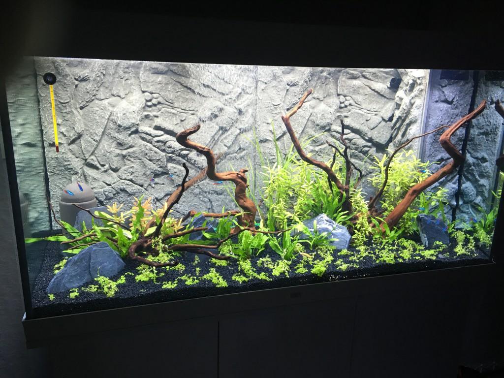 Nieuwe aquarium