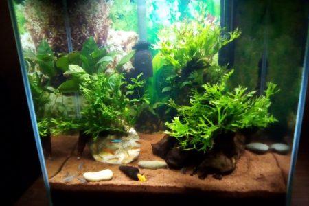 Een aquarium, waar wij wat advies over nodig hebben qua inrichting/bewoners