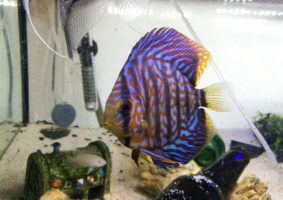 Close up Discus