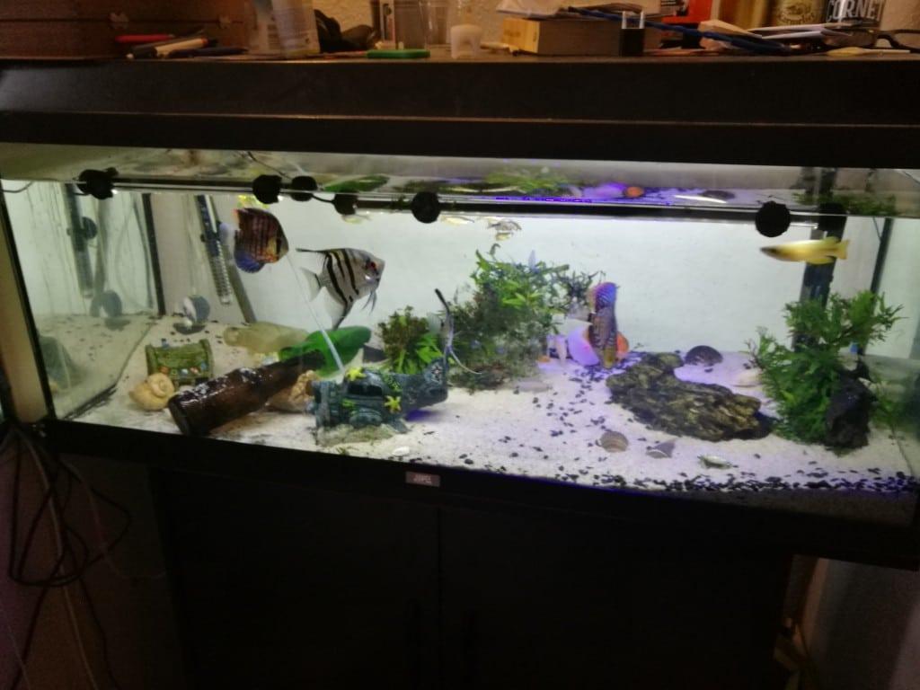Overzicht aquarium