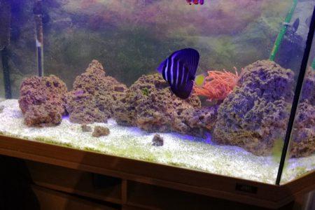 Mn eerste bak, ik begin pas net met koralen.