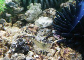 Dit is Josefien. Net als in mijn klein bakje heb ik ook hier een garnaal die me helpt mijn aquarium schoon te houden.