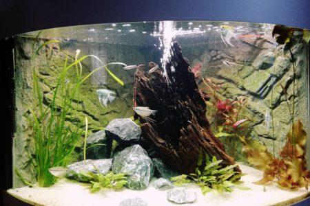 Aquarium is af