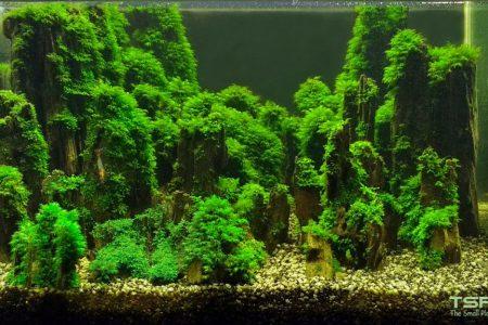Deze aquascape is opgebouwd met driftwood en bekleed met mossen. Eindresultaat