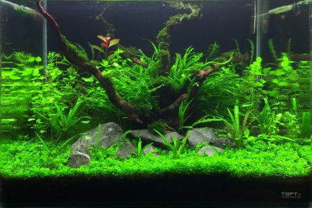 Dit is een aquascape in een 50l bakje