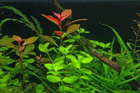 Een detail foto van de planten