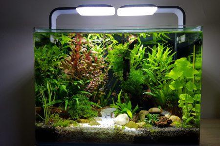 Aquarium vol met planten. Ook zo'n aquarium kopen? Zorg dan voor je planten