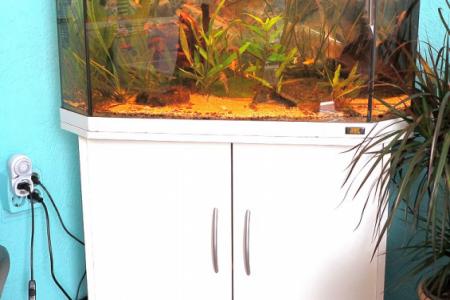 Dit aquarium heb ik samen met een buiten filter te koop