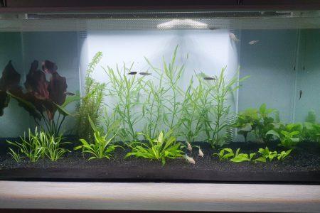 Beginnend aquarium