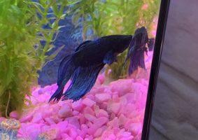 Mooie vis in het blauw!