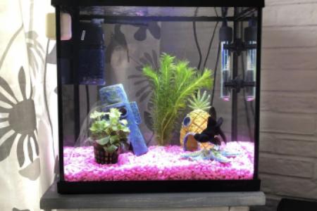 Toen ik mijn black moor nog had was mijn aquarium zo gevuld