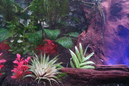 kleur plant